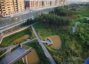 The 34 hectares urban storm water park in the city of Harbin in northern China is an example of successful Sponge City intervention. The storm water park provides multiple ecosystems services: it collects, cleanses and stores storm water and lets it infiltrate it into the aquifers. At the same time it protects and recovers the native natural habitats and provides an aesthetically appealing public space for recreational use. Photograph: Asla.org