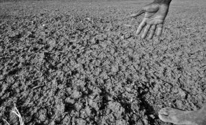 drought_affected_area_in_karnataka_india_2012